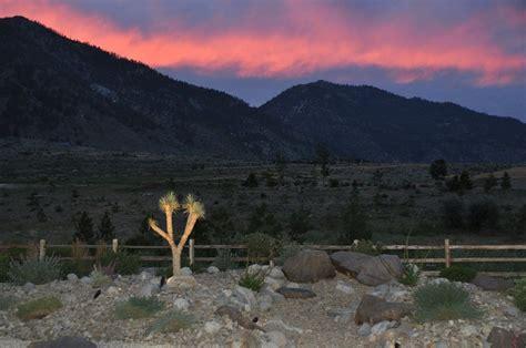 Green Lizard Landscape Llc Landscaping Carson City Nv Landscaping Carson City Nv