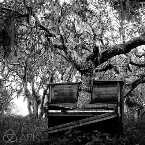 tree piano piano tree abandoned
