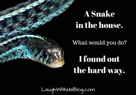 how to get snake out of house how to get snake out of house house plan 2017