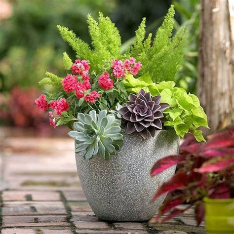 garden ideas  autumn bring  potted plants indoors