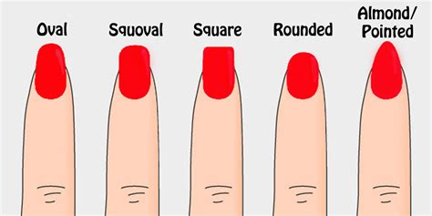 Shape slightly tapering from the nail bed to the tip of the nail
