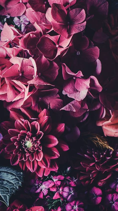 floral iphone wallpapers  celebrate  pinterest