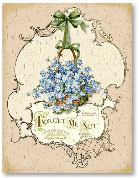 printable forget me not flowers pin by kari lowery on printable pinterest forget me