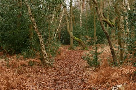 woodland trees various woodland trees