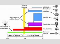 The evolution of early Foraminifera | PNAS Foraminiferal