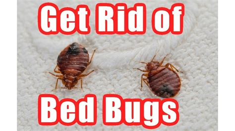 getting rid of bed bugs diy how to get rid of bed bugs fast at home diy bed bug trap youtube