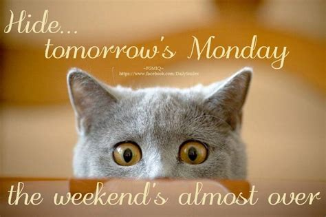 cat tomorrow is monday image 5215 picturescafe