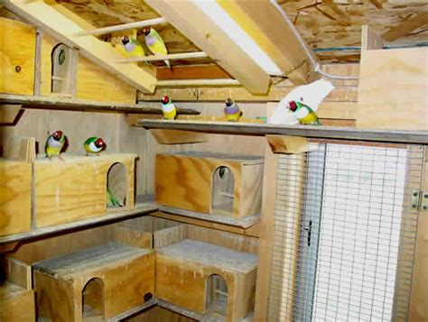 finch information gouldian finches finch supplies
