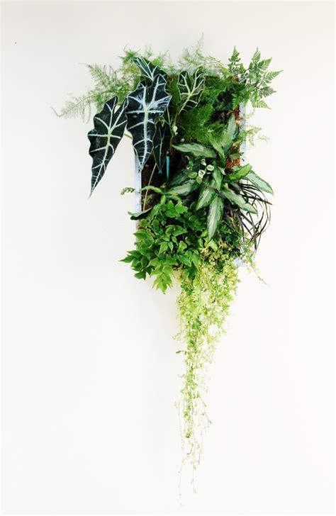 indoor tropical vertical garden  images succulent