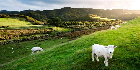 buying house in new zealand buying a house in new zealand is silicon valley code for getting apocalypse insurance