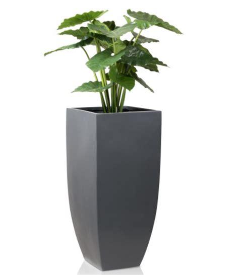 Decorative Plant Pots Best Decorative Indoor Plant Pots Contemporary Interior