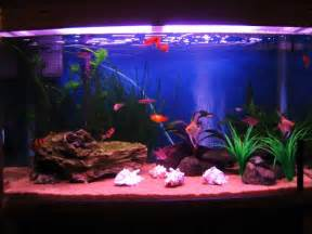Tropical Fish Tanks   Page 13