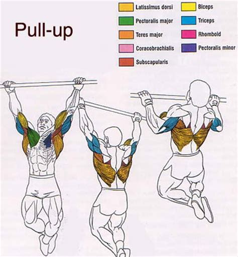 pushups pull ups dips crunches lunges and squats