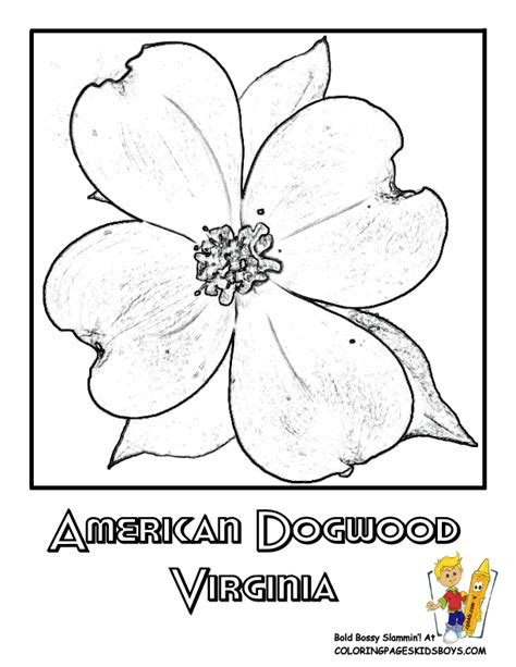 Coloring Page Of Dogwood Flowers | dogwood flower coloring pages sketch coloring page