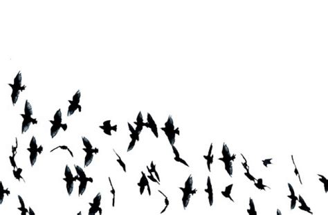 wallpaper tumblr black and white black and white bird tumblr