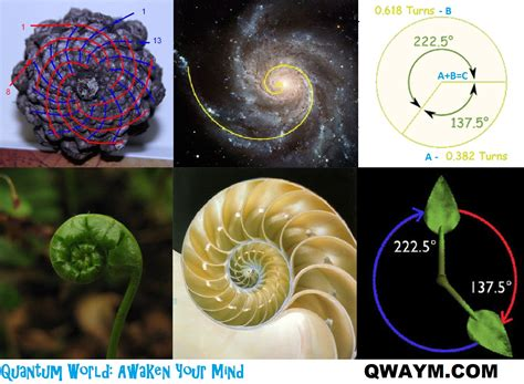 golden section in nature the fibonacci numbers and golden section in nature 1