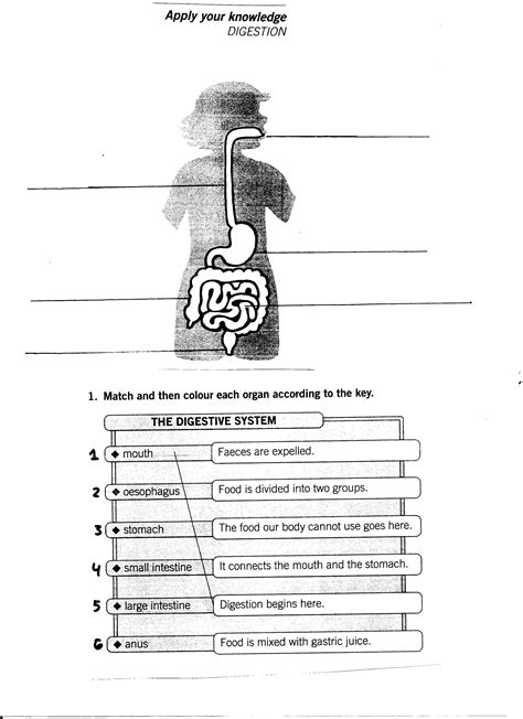 System Worksheets by Systems Worksheets 3rd Grade Worksheet Exle