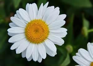 White Flower Images by Punjabi Sms Images Wallpapers Photo Funny Jokes In Punjabi