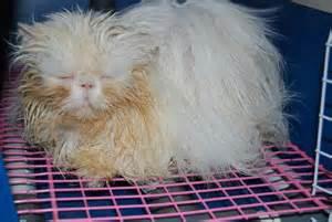 New Blower Pengering Bulu Hewan blower kucing foto kucing