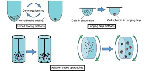 love description about cultural review with best 3d png 3d cell culture methods and applications a short review