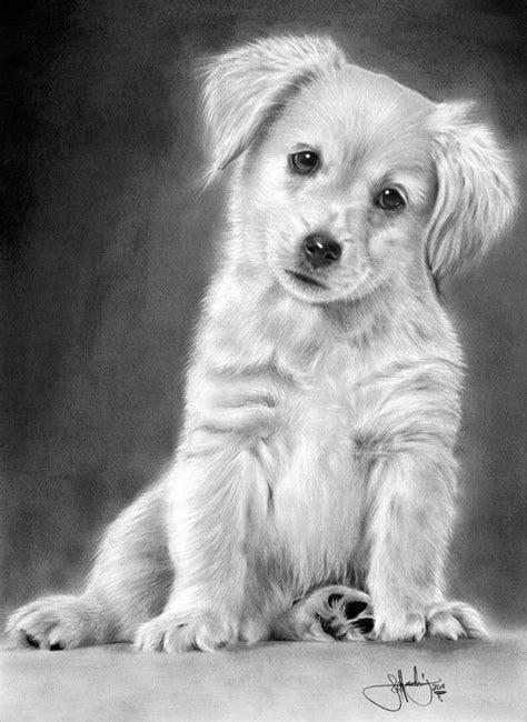 cute dog drawing - Honden | Pinterest - Hond tekeningen