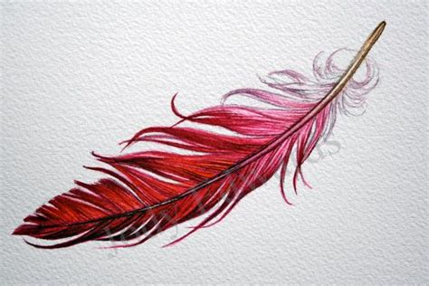 feather tattoo meaning yahoo 95 best tattoo ideas images on pinterest drawings