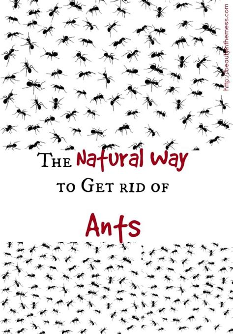 best way to get rid of ants in bathroom 454 best images about garden pest disease on pinterest