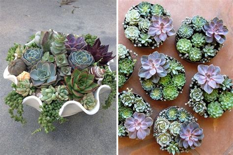 rl tips taking care of succulents rl
