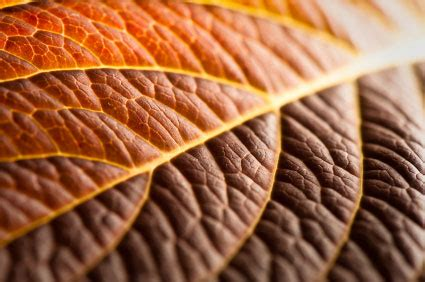 visual design: using texture in photography :: digital