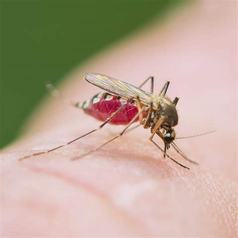 mosquitoes in backyard prevent mosquitoes how to keep these pests out of your