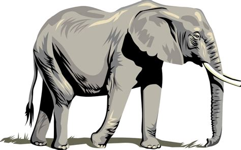 Home Design Tools elephant clipart clipartion com