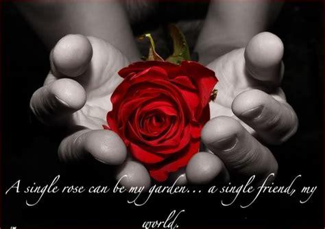 friends red rose friendship love hands flower rose