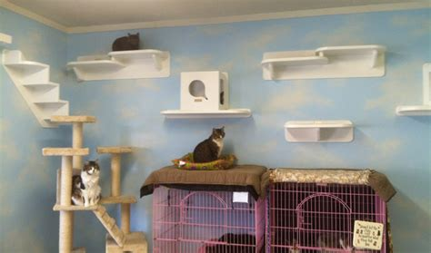 cat wall shelves climbing the vertical cat pictures cat ify your home for the tree