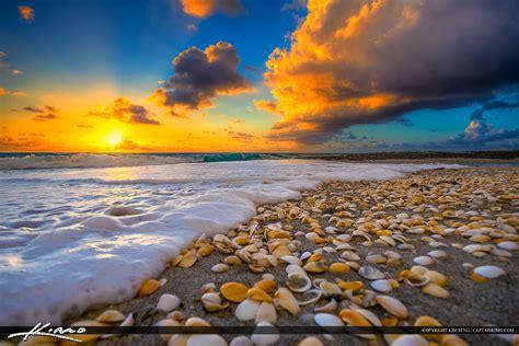 party boat fishing delray beach florida shells on beach during florida sunrise royal stock photo