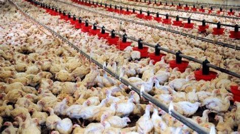 sta alimentare quot cos 236 l industria alimentare sta distruggendo il pianeta