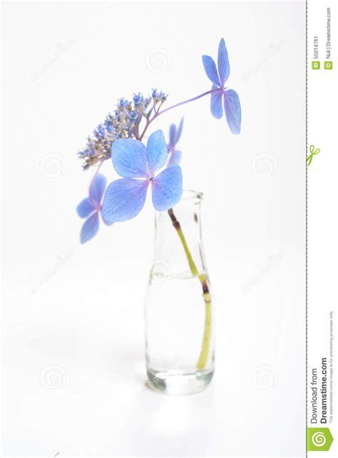 fiori a gambo lungo fiori sul gambo lungo in bottiglia di acqua fotografia