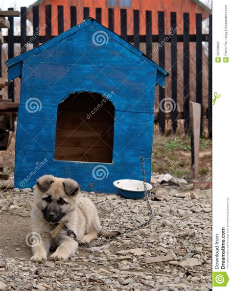 funny dog houses dog in dog house royalty free stock images image 36599839