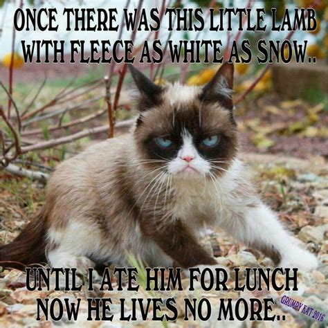 Kat Meme - 17 best images about grumpy cat on pinterest gift quotes