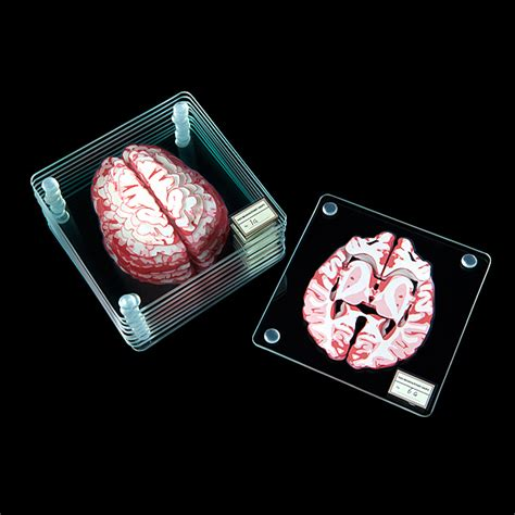 Brain Specimen Coasters Additional Image