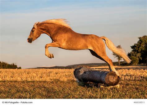 katharina die gro e pferd gestell ponys und kleinpferde die robusten zwerge haustiermagazin