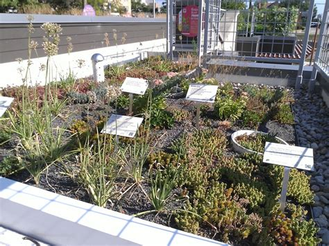 100 ideas to try about green roofs in cincinnati