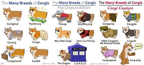 how many corgis does the the many breeds of corgis corgis