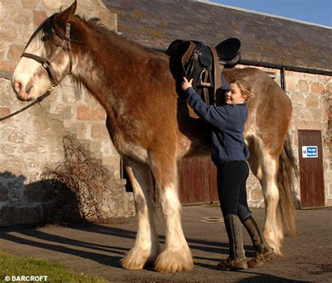 6ft 6ins and still growingdigger the clydesdale