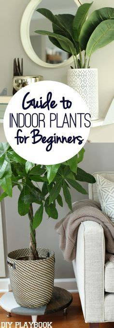 how to arrange indoor plants pilea peperomioides what a cool looking plant likes low