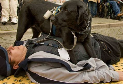 seizure dogs 27 ways pets improve your health in pictures