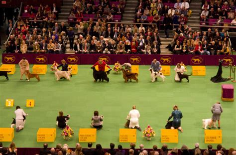 Best In Show At Square Garden by Westminster Kennel Club Show At Square Garden
