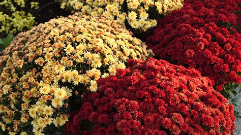 fall plants fall garden flowers flower garden pictures pictures of