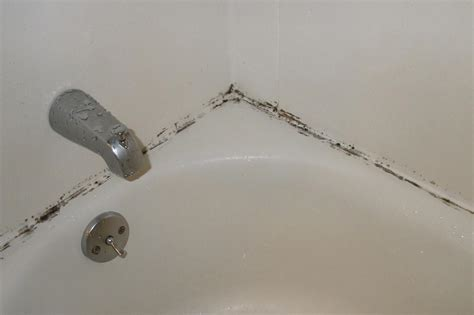 mildew in bathtub bathroom mold how to kill bathroom mold mold on