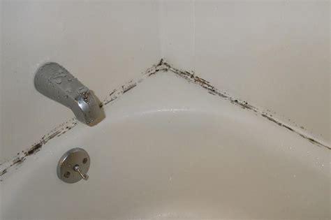 Bathroom Mold   How to Kill Bathroom Mold   Mold on