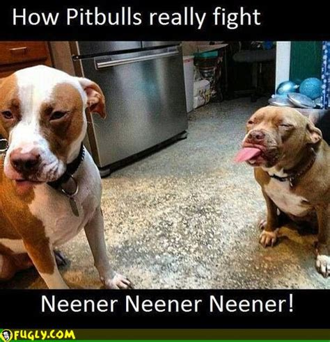 Really Free Search How Pitbulls Really Fight Fugly